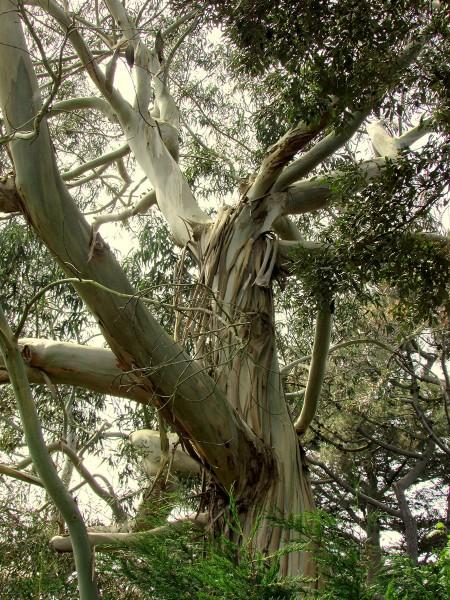 cote-de-granit-rose-arbre-objets-poetiques