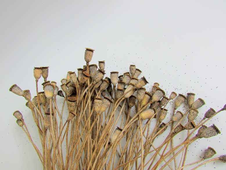 -pavots-5-objets-poetiques-cecile-chaumeil