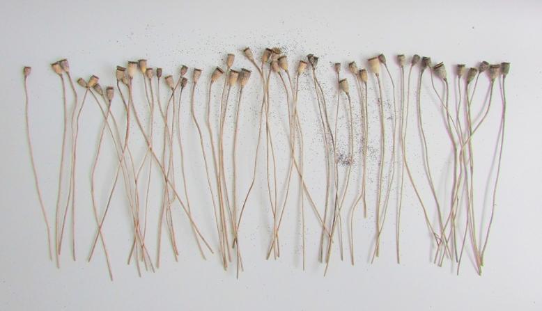 pavots-8-objets-poetiques-cecile-chaumeil