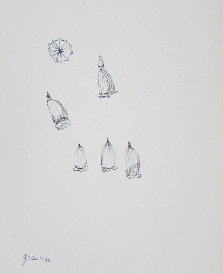 pavots-croquis-objets-poetiques-cecile-chaumeil
