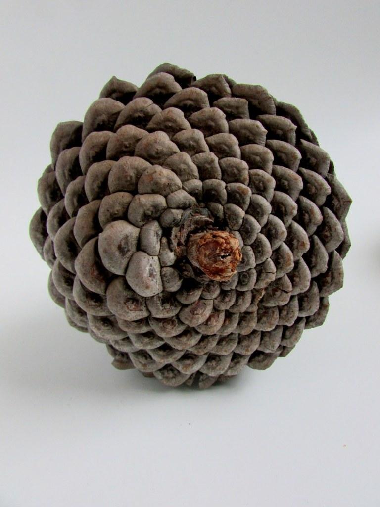 pomme-de-pin-objets-poetiques-2