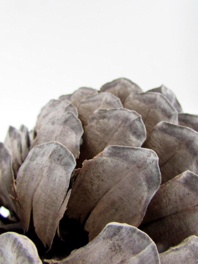 pomme-de-pin-objets-poetiques-4