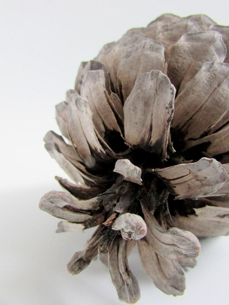 pomme-de-pin-objets-poetiques-5