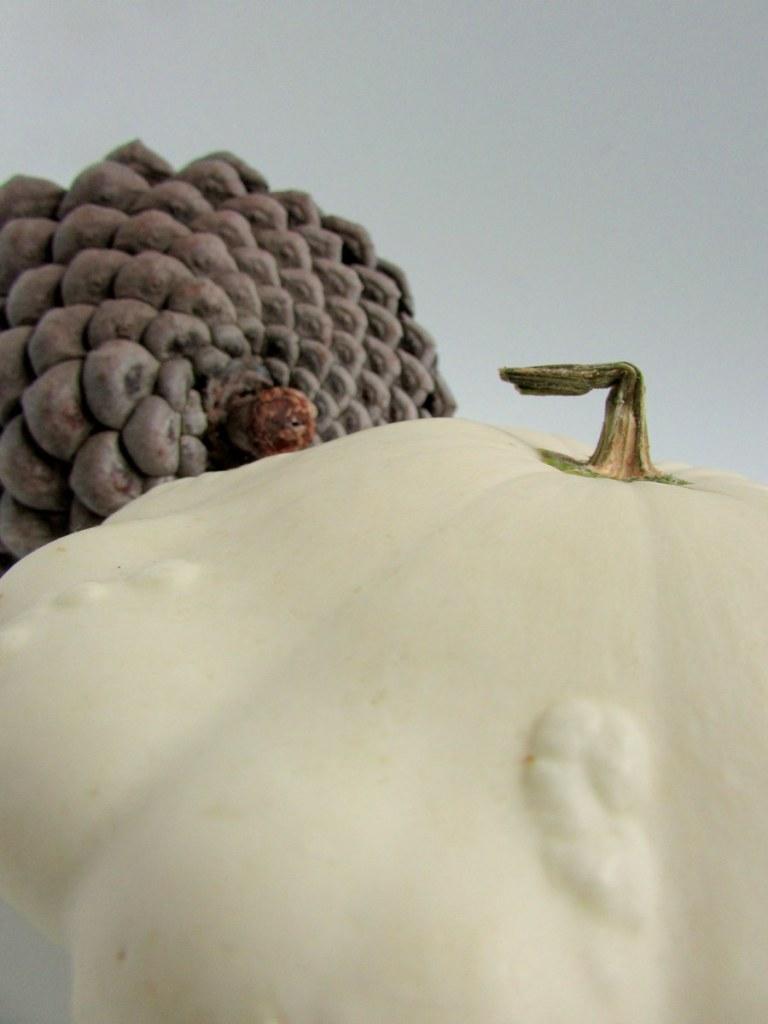 pomme-de-pin-patisson-objets-poetiques-3